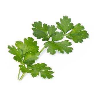 Parsley dish refill ingot for vegetable garden