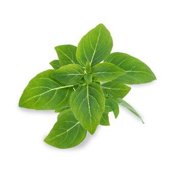 Basil end green refill ingot for vegetable garden